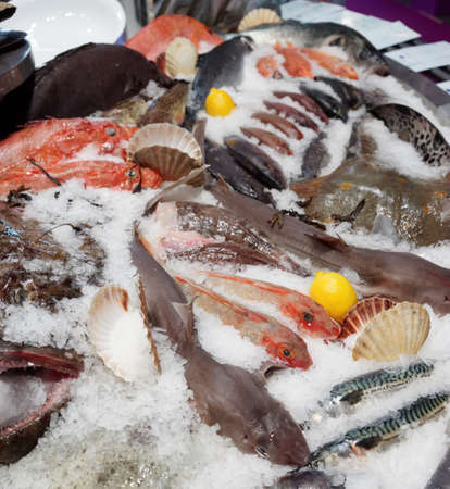 fish market: Wide selection of fish on seafood market display