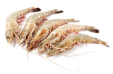 Raw whole prawns isolated on white background  photo