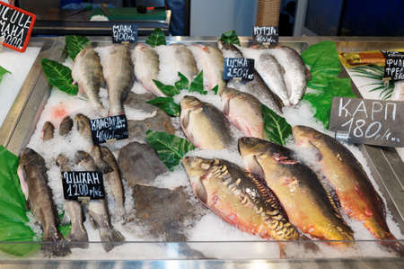Choice of fish on market display photo