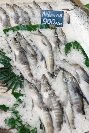 Icefish mackerel on market stall photo