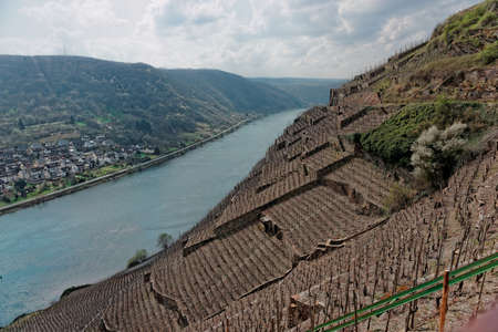 winemaking: Riesling vineyards on Moselle river, Germany Stock Photo