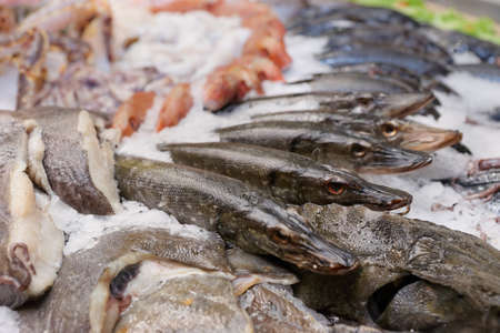 Pikes and saltwater fish on market display photo