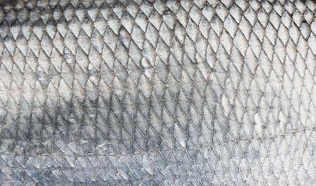 asp: Asp fish scales, natural texture Stock Photo