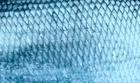 animal scale: Asp fish scales, natural texture, toned Stock Photo