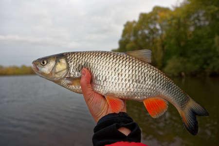 scenics: Chub in fishermans hand, autumn scenics