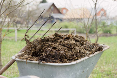 carretilla: Carretilla llena de estiércol y horquilla en jardín