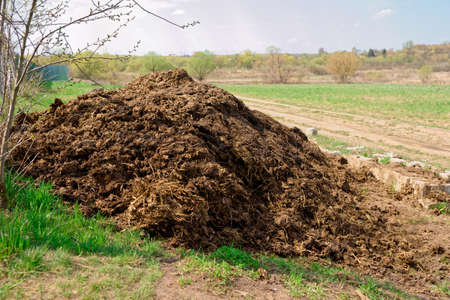 dung: Pile of manure, great fertilizer, countryside shot Stock Photo