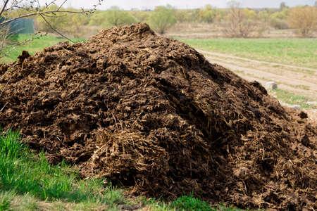 manure: Pile of manure, great fertilizer, countryside shot Stock Photo