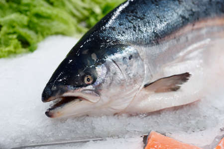 King salmon on ice in supermarket, cloes-up of head