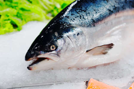 King salmon on ice in supermarket, cloes-up of head, toned image