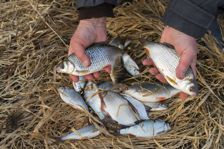 Fisherman holds roach fish, bragging about the catch