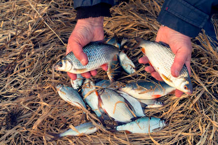 Fisherman holds roach fish, bragging about the catch, toned image
