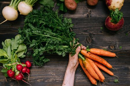 Organic vegetables. Farmers hands holding harvested carrots on the dark wooden background, top view.