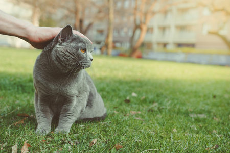 Hand stroking shorthair cat outdoor. With copy space.
