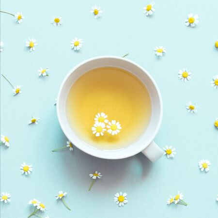 chamomile tea with chamomile flowers on blue background.