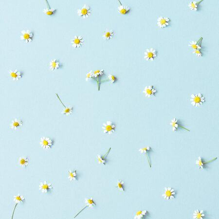 Flower background. Chamomile flowers on blue background