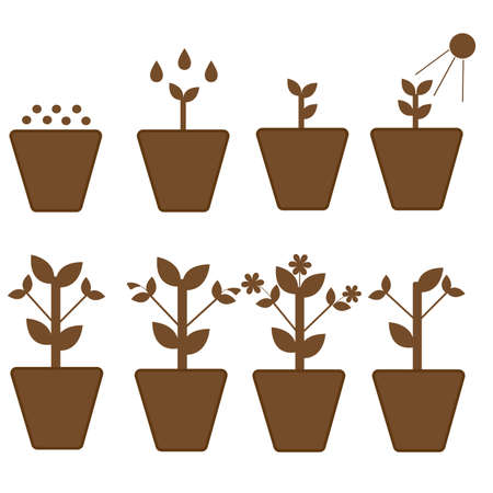 Vector set. Stages of growth of a plant from planting to flowering and withering