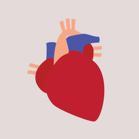 Vector illustration. Human body heart on isolated background Illustration