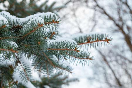 White snowy winter park in Russia in Saint-Petersburg