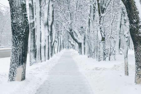 White snowy winter park in Russia in Saint-Petersburg 版權商用圖片 - 124993009