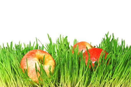 Red apples in a green grass photo