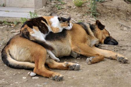 Katze schläft auf einem Hund im Freien