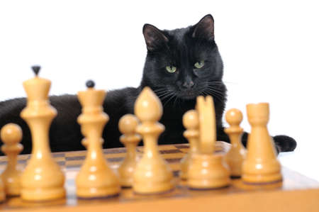 Black cat lies near the chessboard isolated on white background. photo
