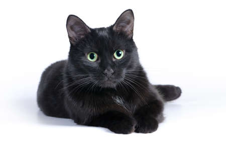Black cat lying on a white background, looking at camera. Stock Photo