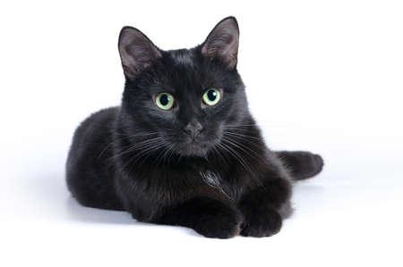 Schwarze Katze, die auf einem weißen Hintergrund, Blick in die Kamera. Lizenzfreie Bilder - 37032838
