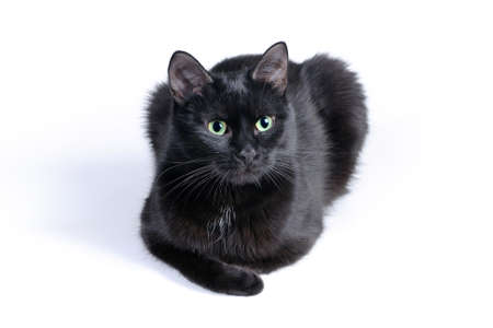 Black cat lying on a white background, looking next to the camera. Stock Photo