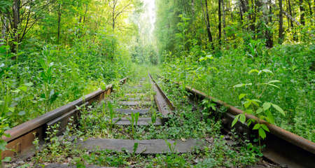 forest railroad: Abandoned railroad overgrown with green plants in the forest. Stock Photo