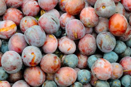 overripe: Background of red and blue overripe plum. Top view, close-up shooting Stock Photo
