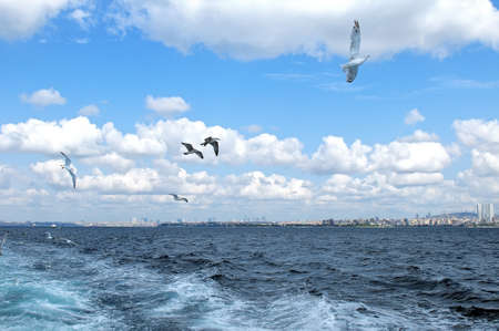 Seagulls  in flight against a blue sky with white clouds and foam trail in the water from the floating vessel Stock Photo