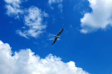 Seagull in flight against a blue sky with white clouds. Stock Photo