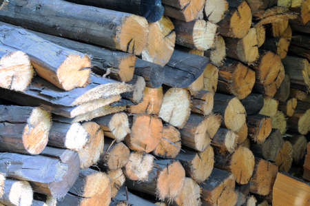 softwood: Dry firewood in a pile for furnace kindling. Stock Photo
