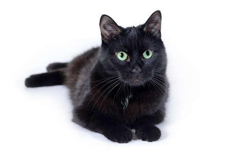 Schwarze Katze liegend und Blick auf die Kamera isoliert auf weißem Hintergrund Standard-Bild - 65280476