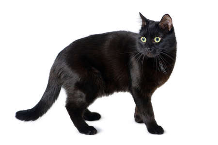 Black cat with a scared look is isolated on white background Standard-Bild