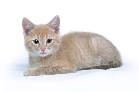 Portrait of the cute little red kitten who is looking at the camera isolated on a white background Lizenzfreie Bilder