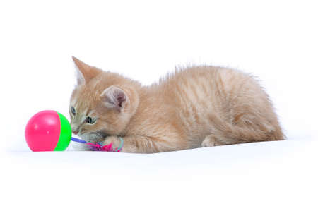 Portrait of a cute little red kitten of the player with a pet toy is isolated on a white background Lizenzfreie Bilder