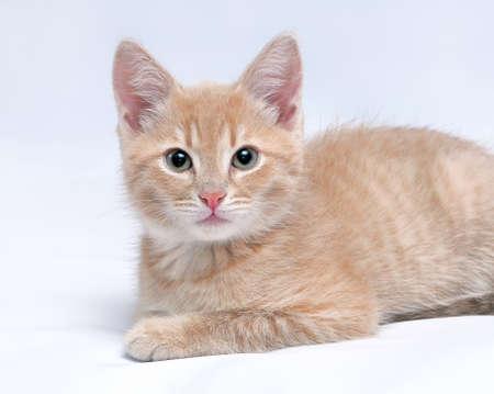 Portrait des netten kleinen roten Kätzchen in die Kamera auf einem hellen Hintergrund suchen Lizenzfreie Bilder
