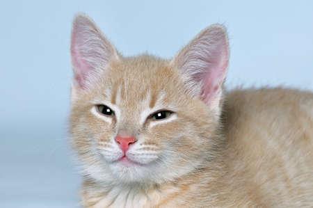 Maulkorb niedlich schöne rote Katze, die auf die Kamera auf einem grauen Hintergrund aussieht. Nahansicht.