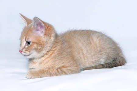 Portrait eines netten kleinen roten Kätzchen auf einem hellen Hintergrund
