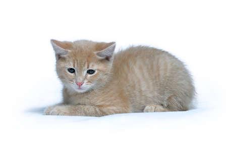 Kleine rote Ingwer Kätzchen liegt auf einem weißen Hintergrund