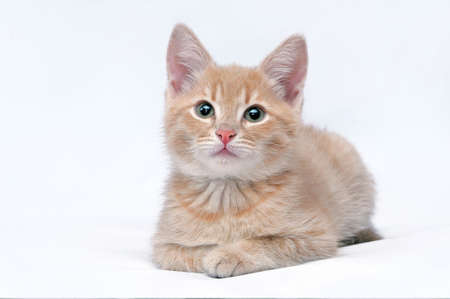Portrait of the cute little red kitten looking at the camera on a light background