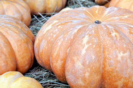 Big yellow round pumpkins. Close up, small depth of sharpness Lizenzfreie Bilder