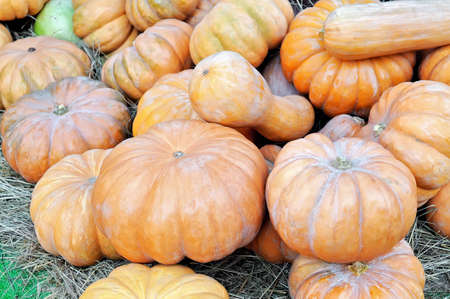 Many pumpkins of different sizes and colors on the straw