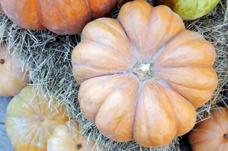 Pumpkin lies on straw and on other pumpkins. View from above.