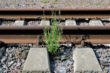 Grüne Pflanze wächst auf der verlassenen Eisenbahn. Lizenzfreie Bilder