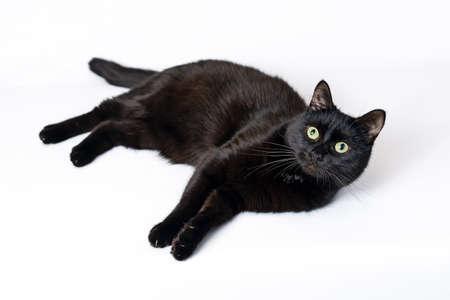 Studioporträt der jungen schwarzen Katze, die auf einem weißen Hintergrund schaut in der Kamera liegt Standard-Bild