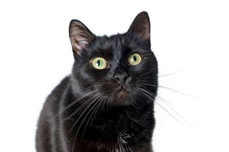 Porträt einer Mündung einer jungen schwarzen Katze auf einem weißen Hintergrund, der in der Kamera schaut. Studioaufnahmen. Standard-Bild